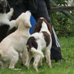 Welpenkurs Hundeschule Hof Holstein